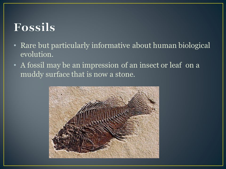Rare but particularly informative about human biological evolution. A fossil may be an impression of an insect or leaf on a muddy surface that is now
