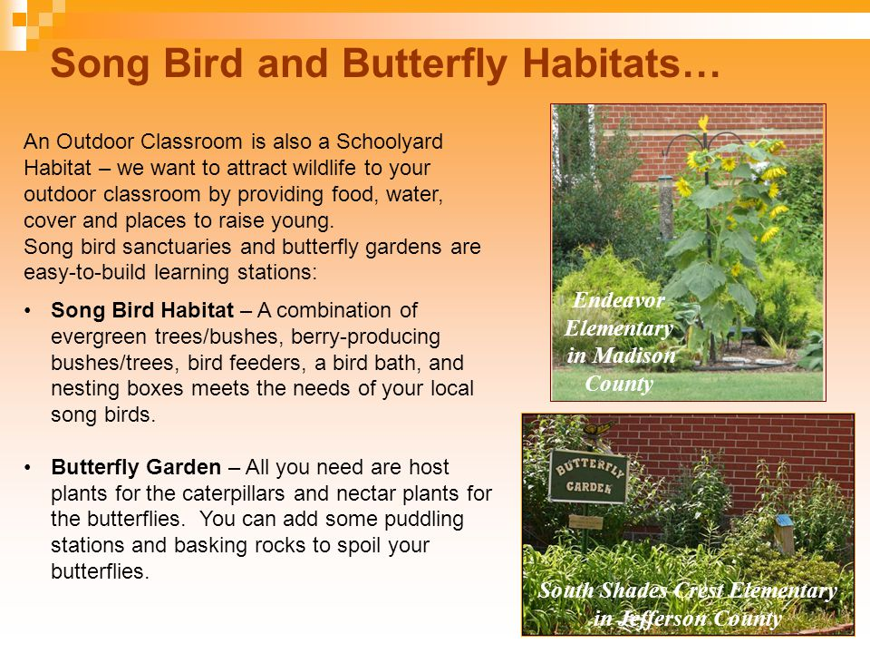 Song Bird and Butterfly Habitats… South Shades Crest Elementary in Jefferson County Endeavor Elementary in Madison County An Outdoor Classroom is also a Schoolyard Habitat – we want to attract wildlife to your outdoor classroom by providing food, water, cover and places to raise young.