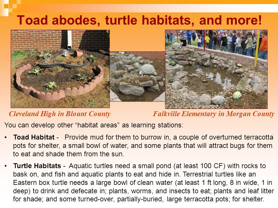 "Toad abodes, turtle habitats, and more! Cleveland High in Blount CountyFalkville Elementary in Morgan County You can develop other ""habitat areas"" as"