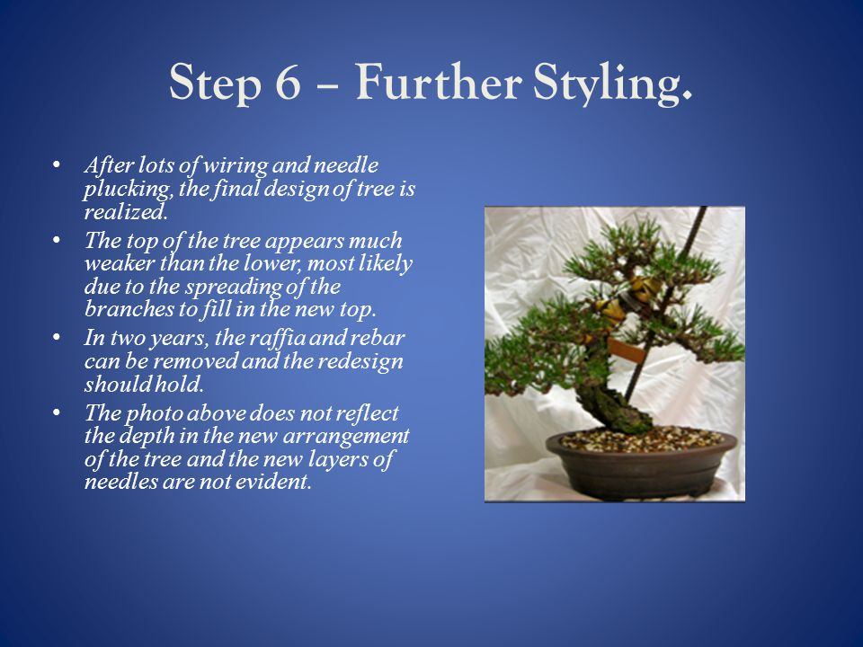 Step 6 – Further Styling.