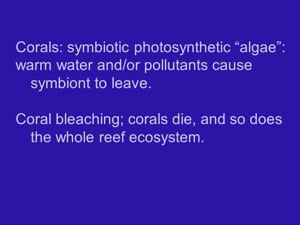 Corals: symbiotic photosynthetic algae : warm water and/or pollutants cause symbiont to leave.