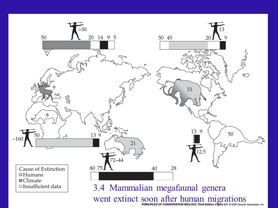3.4 Mammalian megafaunal genera went extinct soon after human migrations