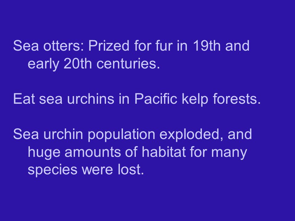 Sea otters: Prized for fur in 19th and early 20th centuries.