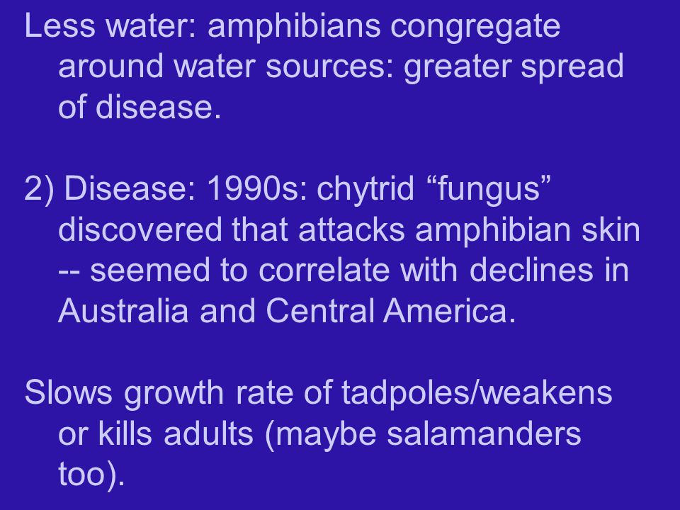 Less water: amphibians congregate around water sources: greater spread of disease.