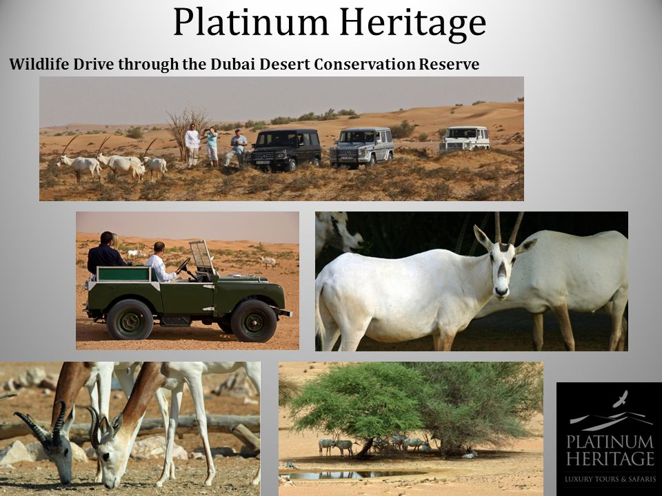 Platinum Heritage Wildlife Drive through the Dubai Desert Conservation Reserve