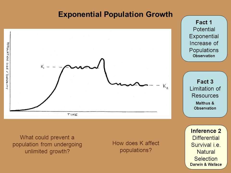 Exponential Population Growth What could prevent a population from undergoing unlimited growth? Fact 1 Potential Exponential Increase of Populations O