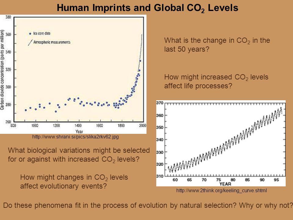 http://www.shrani.si/pics/slika2rkv62.jpg http://www.2think.org/keeling_curve.shtml Human Imprints and Global CO 2 Levels How might increased CO 2 lev