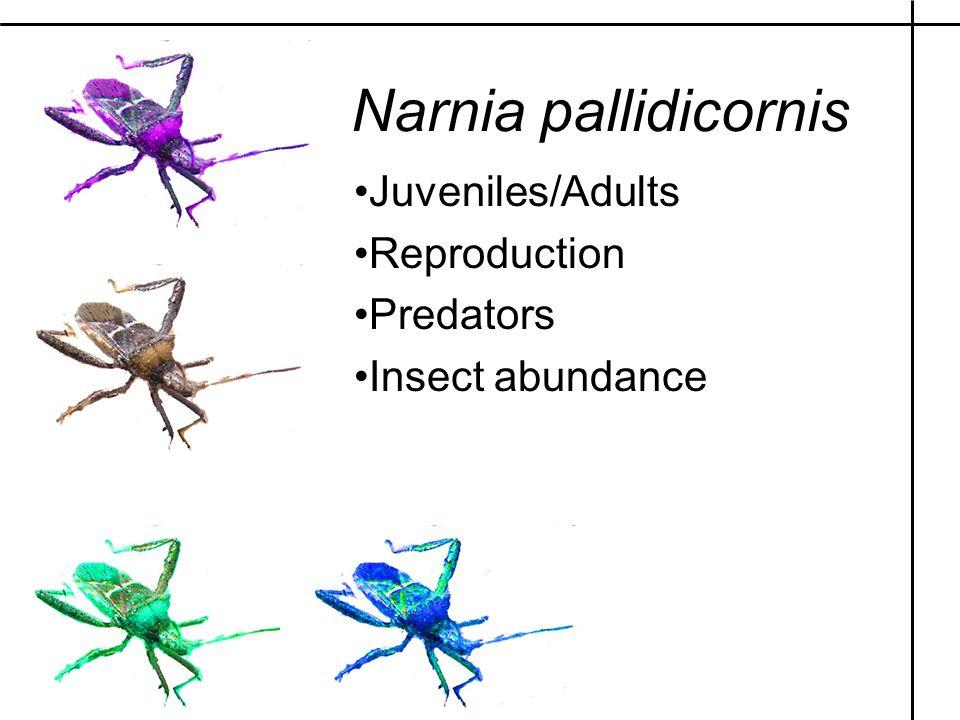 Juveniles/Adults Reproduction Predators Insect abundance Narnia pallidicornis
