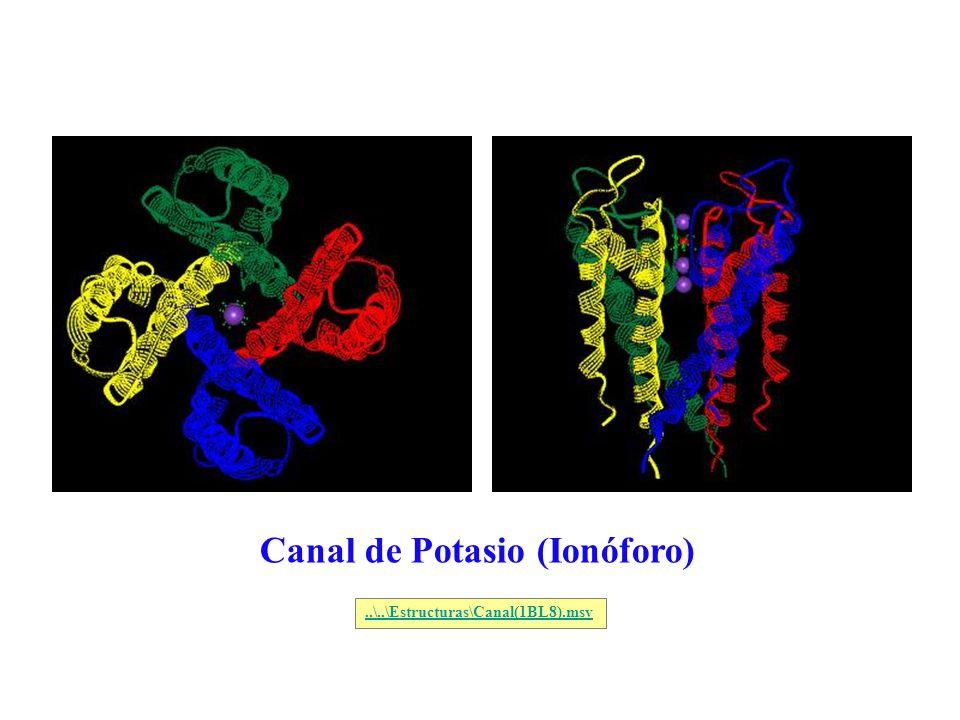 Canal de Potasio (Ionóforo)..\..\Estructuras\Canal(1BL8).msv