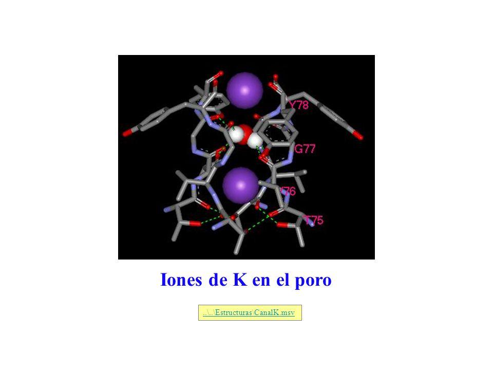 Iones de K en el poro..\..\Estructuras\CanalK.msv