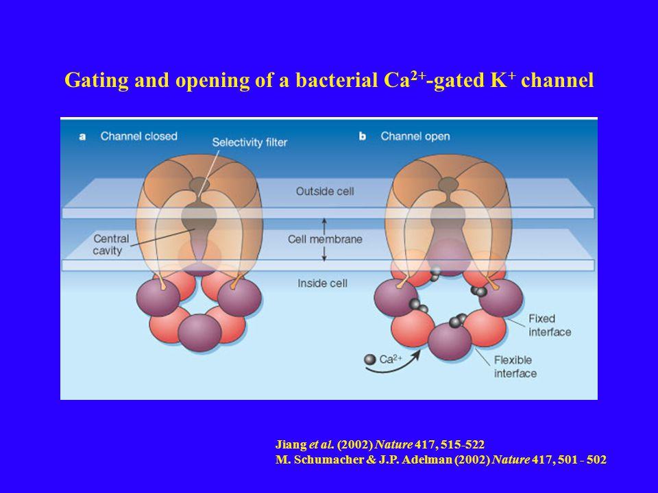 Jiang et al. (2002) Nature 417, 515-522 M. Schumacher & J.P.