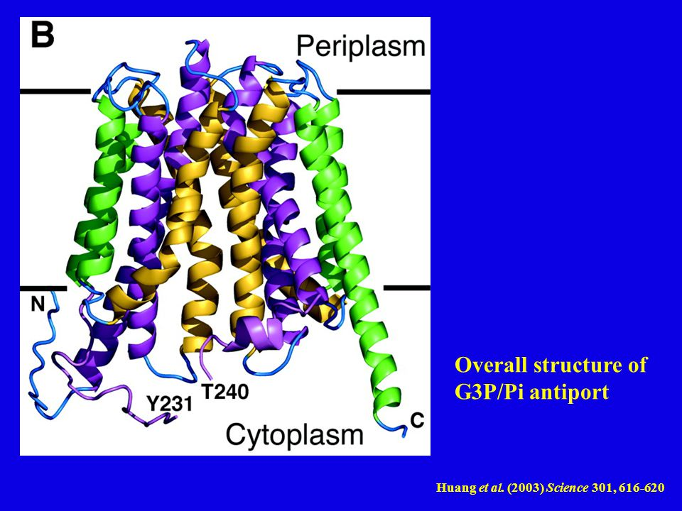 Huang et al. (2003) Science 301, 616-620 Overall structure of G3P/Pi antiport
