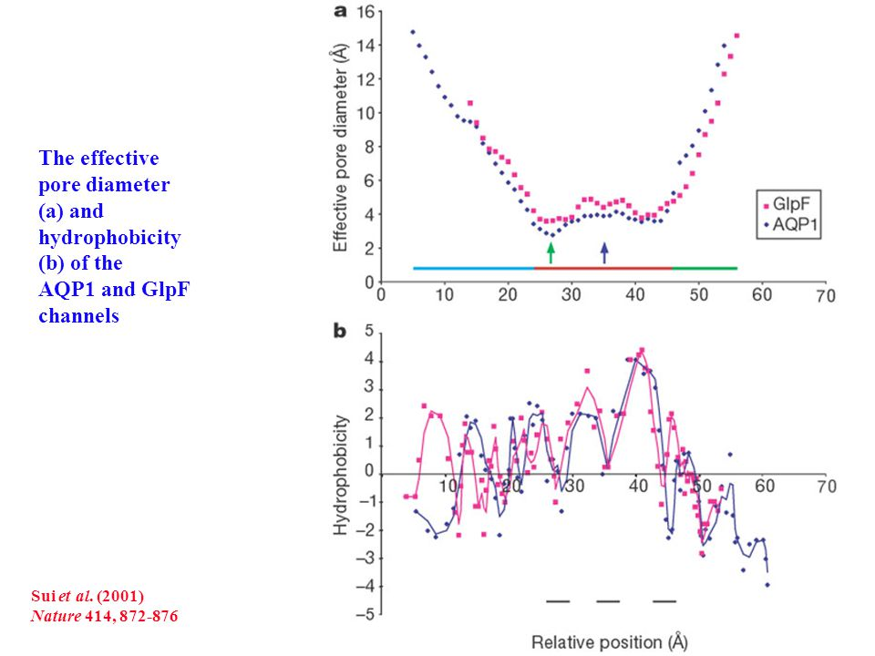 The effective pore diameter (a) and hydrophobicity (b) of the AQP1 and GlpF channels Sui et al.