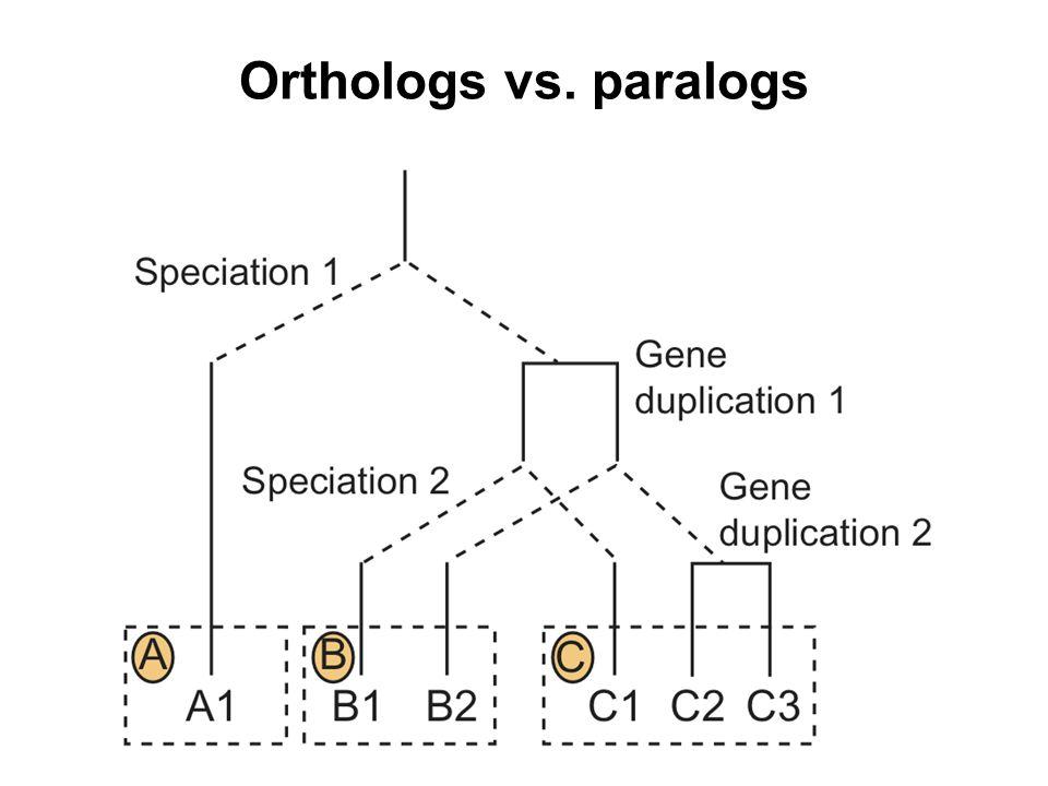 Orthologs vs. paralogs
