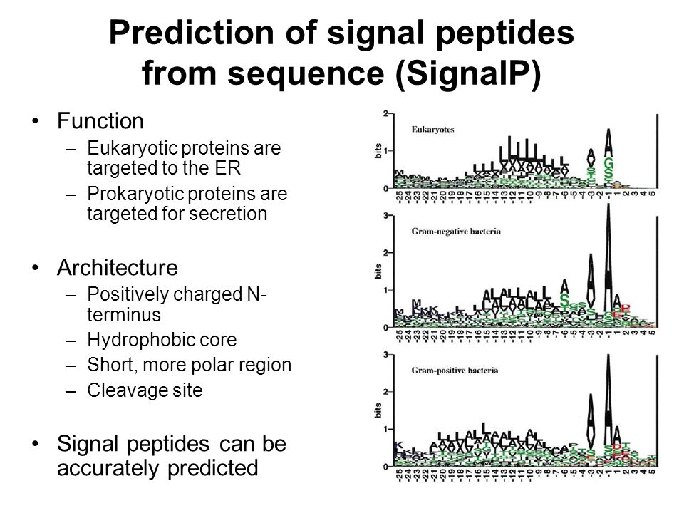 Prediction of signal peptides from sequence (SignalP) Function –Eukaryotic proteins are targeted to the ER –Prokaryotic proteins are targeted for secr