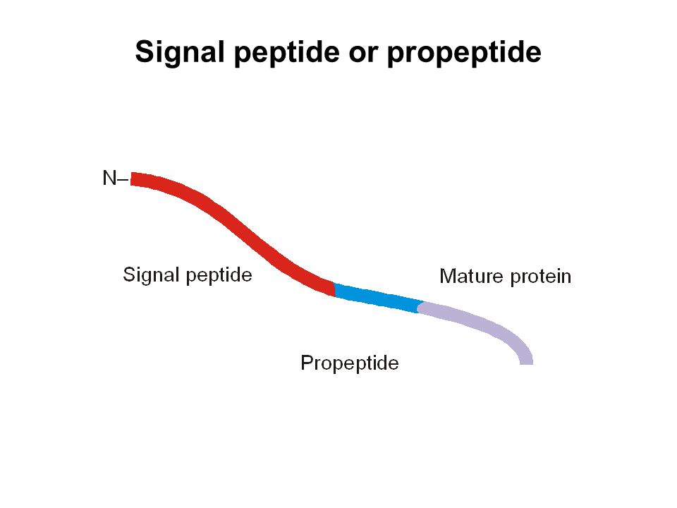 Signal peptide or propeptide