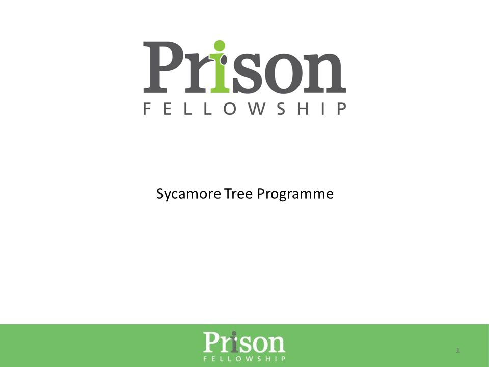 11 Sycamore Tree Programme
