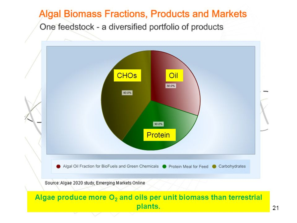 21 CHOsOil Protein Algae produce more O 2 and oils per unit biomass than terrestrial plants.