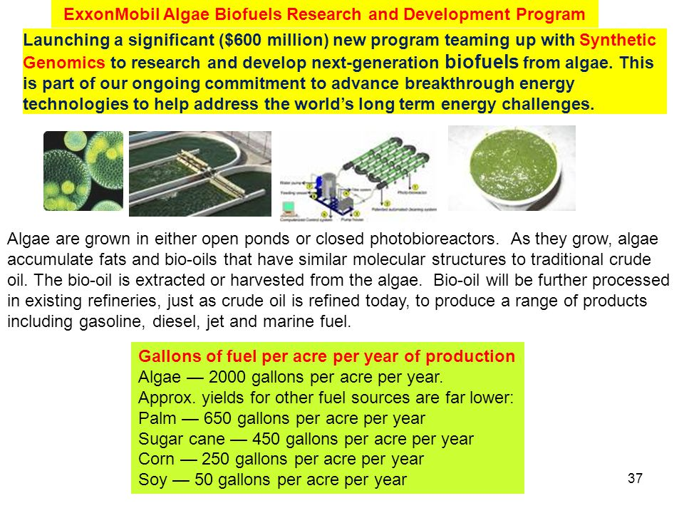 Algae are grown in either open ponds or closed photobioreactors. As they grow, algae accumulate fats and bio-oils that have similar molecular structur