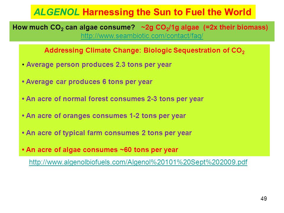 49 Addressing Climate Change: Biologic Sequestration of CO 2 Average person produces 2.3 tons per year Average car produces 6 tons per year An acre of