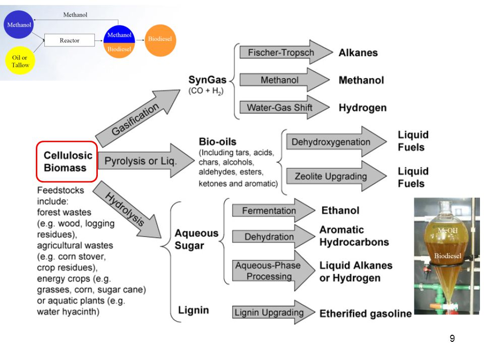 Overview of Photosynthesis 20 Light Rxn Dark Rxn Ethanol