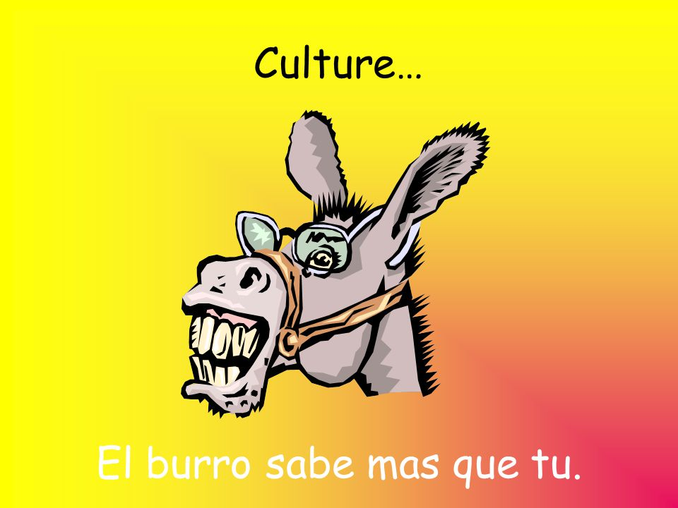 Culture… El burro sabe mas que tu.