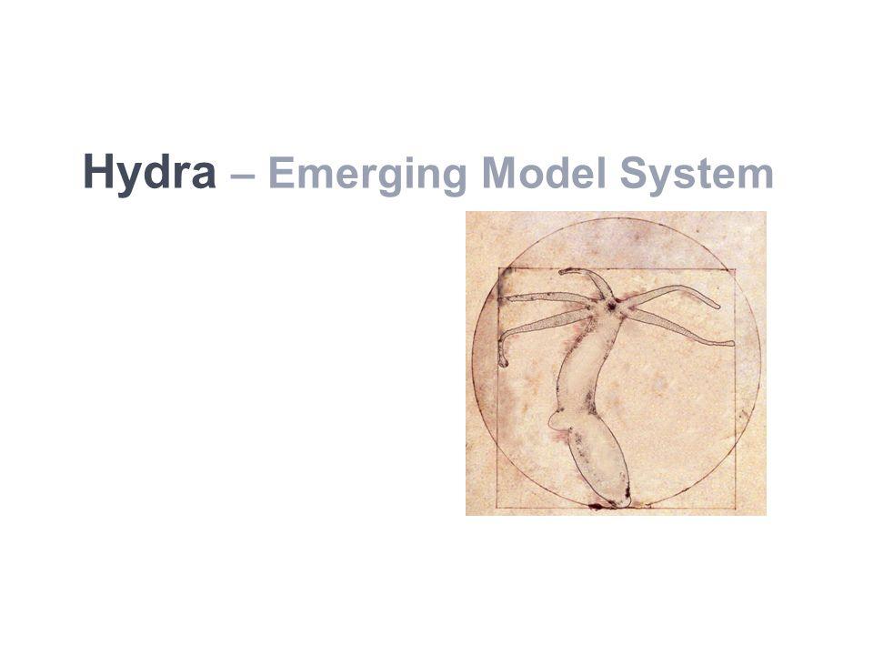 Hydra – Emerging Model System