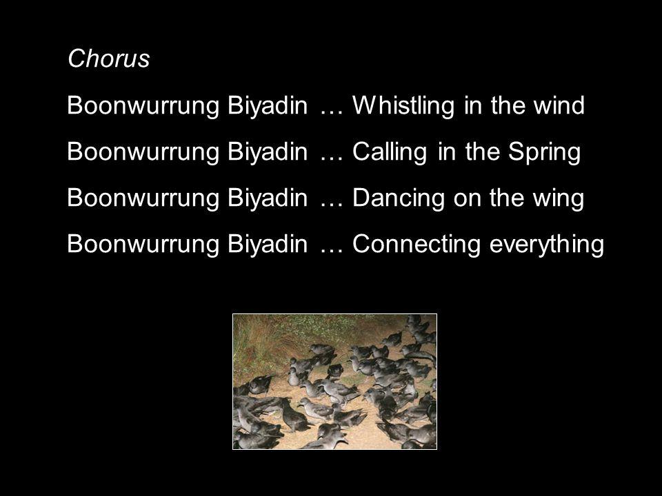 Chorus Boonwurrung Biyadin … Whistling in the wind Boonwurrung Biyadin … Calling in the Spring Boonwurrung Biyadin … Dancing on the wing Boonwurrung B