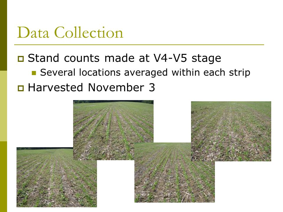 Data Collection  Stand counts made at V4-V5 stage Several locations averaged within each strip  Harvested November 3