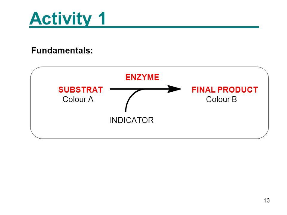 13 Activity 1 Fundamentals: