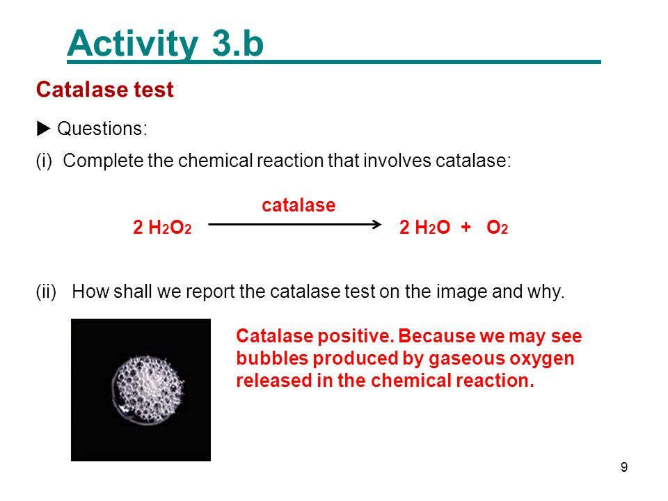 10 Activity 3.c Oxidase test  Text frame: The name of the test is Oxidase.