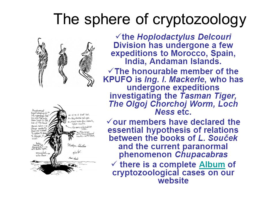 The sphere of cryptozoology the Hoplodactylus Delcouri Division has undergone a few expeditions to Morocco, Spain, India, Andaman Islands.