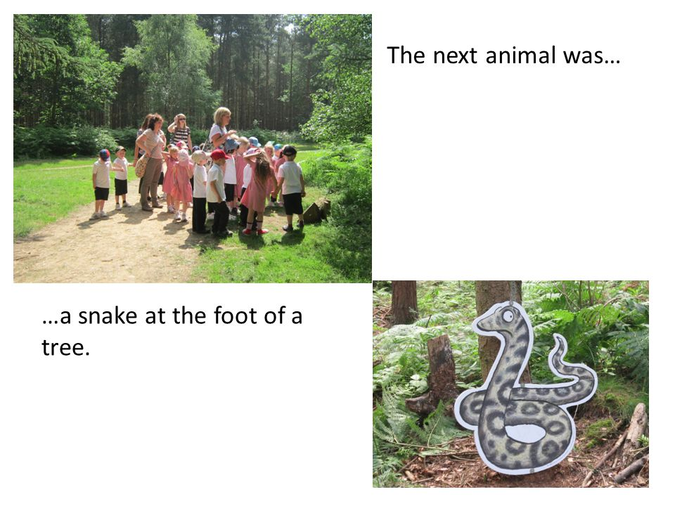 The next animal was… …a snake at the foot of a tree.