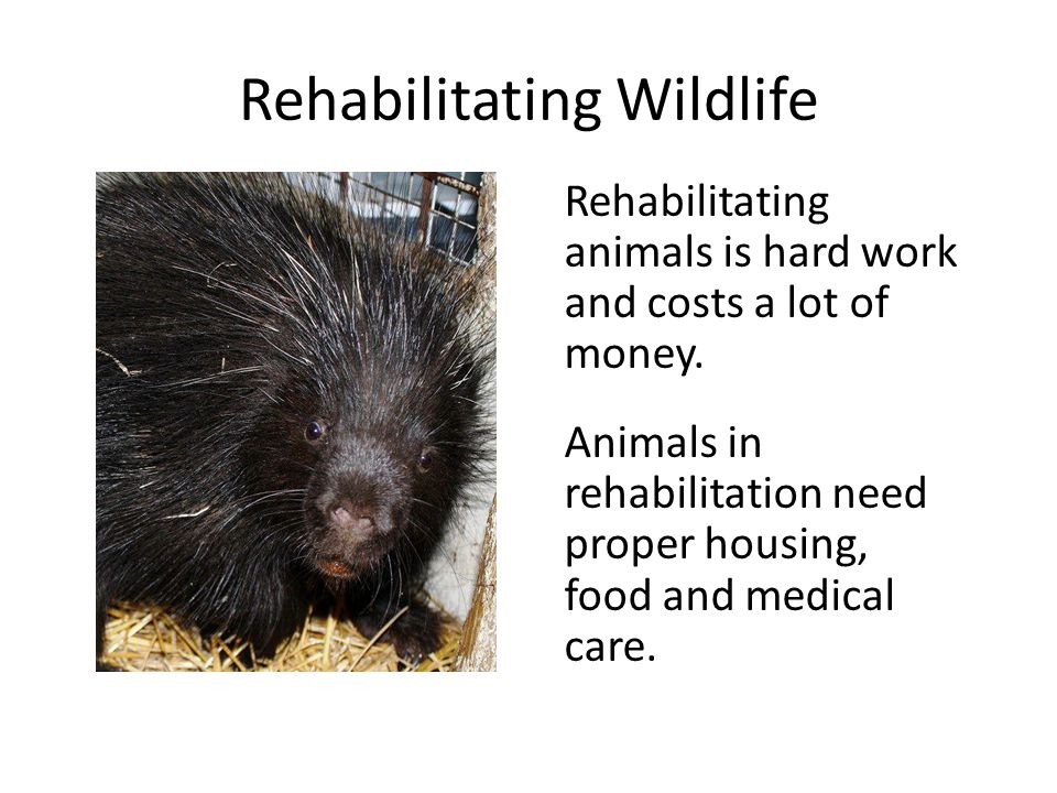 Rehabilitating Wildlife Rehabilitating animals is hard work and costs a lot of money. Animals in rehabilitation need proper housing, food and medical