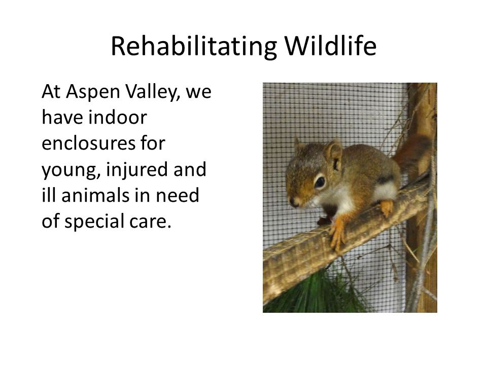 Rehabilitating Wildlife We also have outdoor pond and forest enclosures for older baby animals.