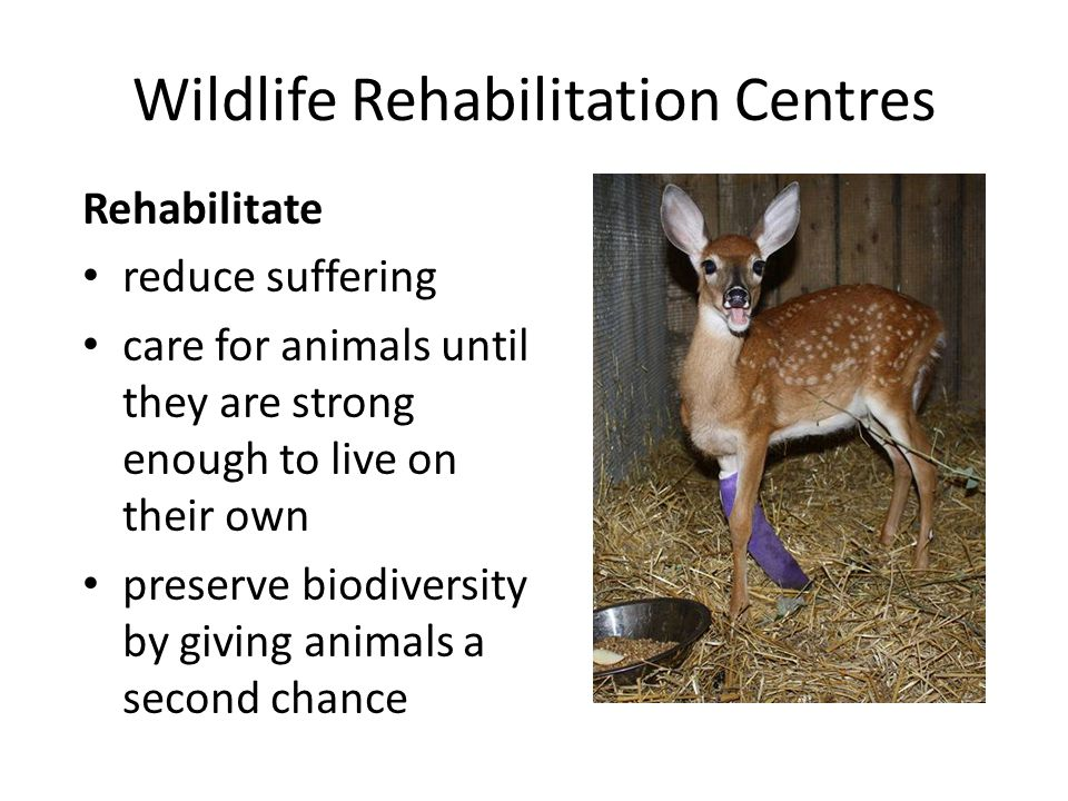 Wildlife Rehabilitation Centres Rehabilitate reduce suffering care for animals until they are strong enough to live on their own preserve biodiversity
