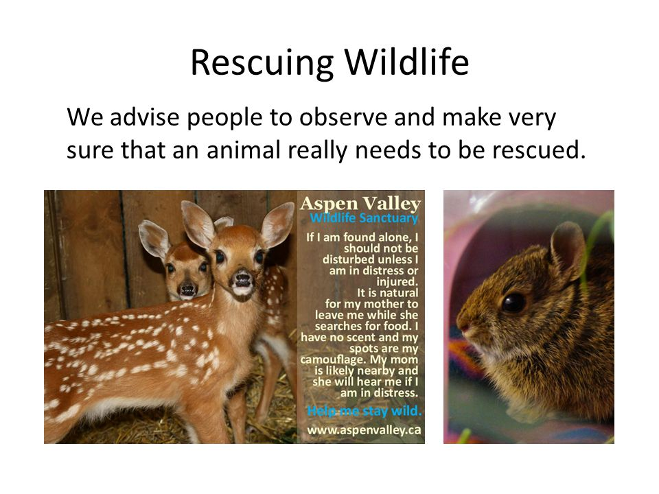 Rescuing Wildlife We advise people to observe and make very sure that an animal really needs to be rescued.