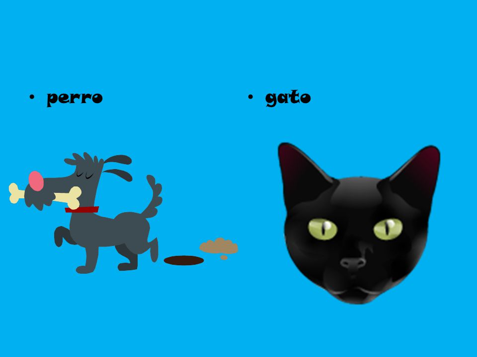 perro gato