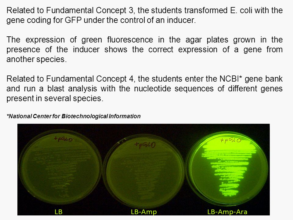 Related to Fundamental Concept 3, the students transformed E. coli with the gene coding for GFP under the control of an inducer. The expression of gre