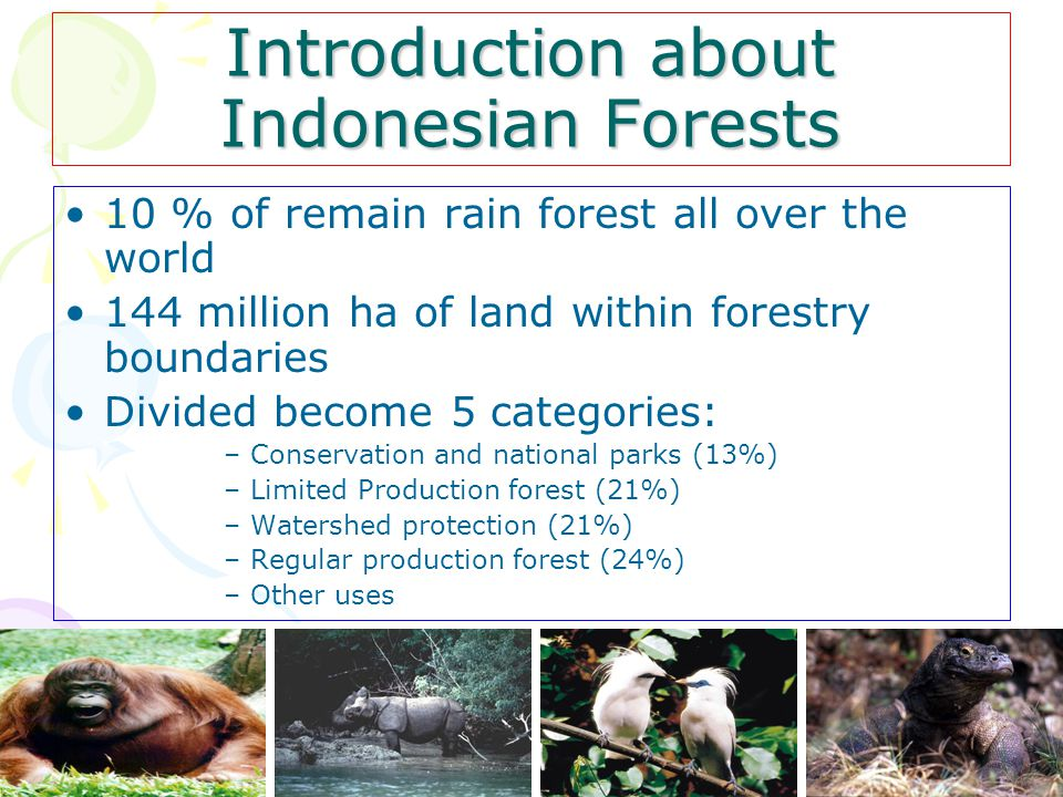 10 % of remain rain forest all over the world 144 million ha of land within forestry boundaries Divided become 5 categories: –Conservation and national parks (13%) –Limited Production forest (21%) –Watershed protection (21%) –Regular production forest (24%) –Other uses Introduction about Indonesian Forests