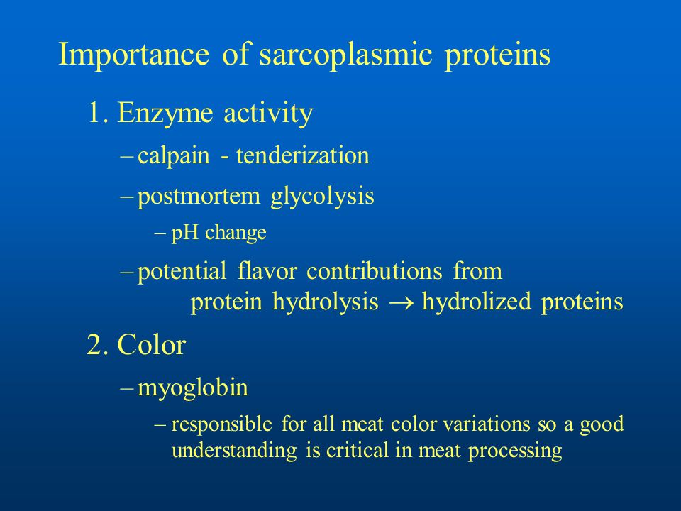 Importance of sarcoplasmic proteins 1.