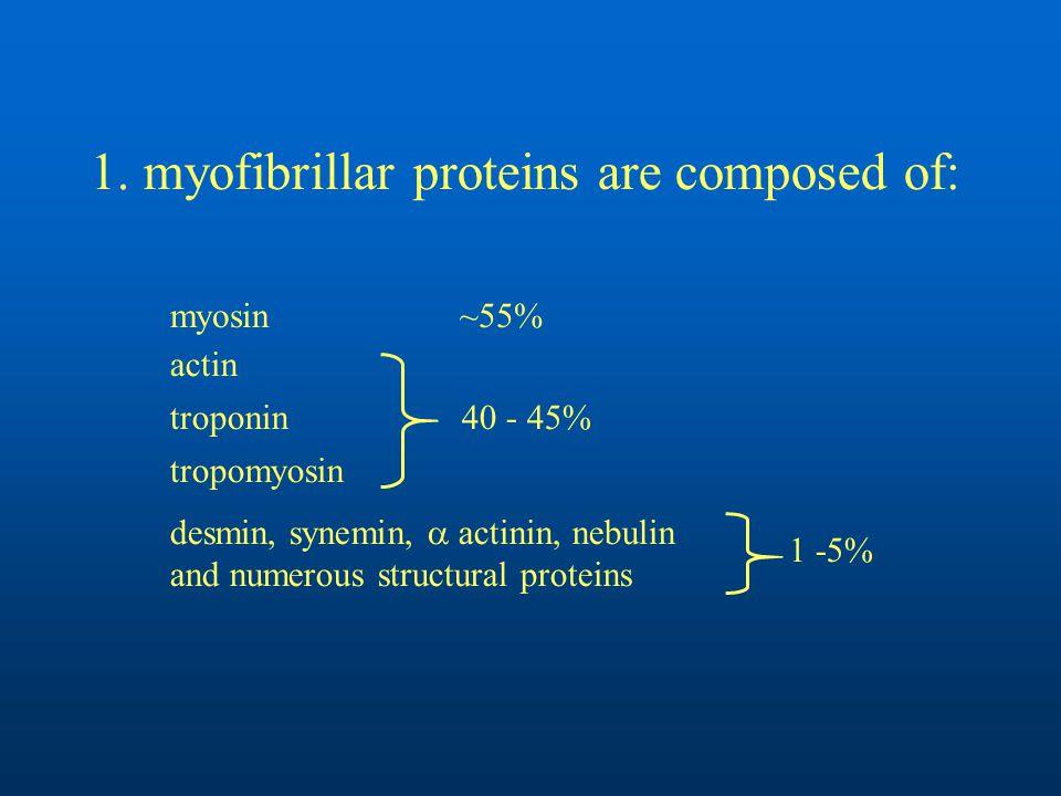 1. myofibrillar proteins are composed of: myosin ~55% 40 - 45% 1 -5% actin troponin tropomyosin desmin, synemin,  actinin, nebulin and numerous struc
