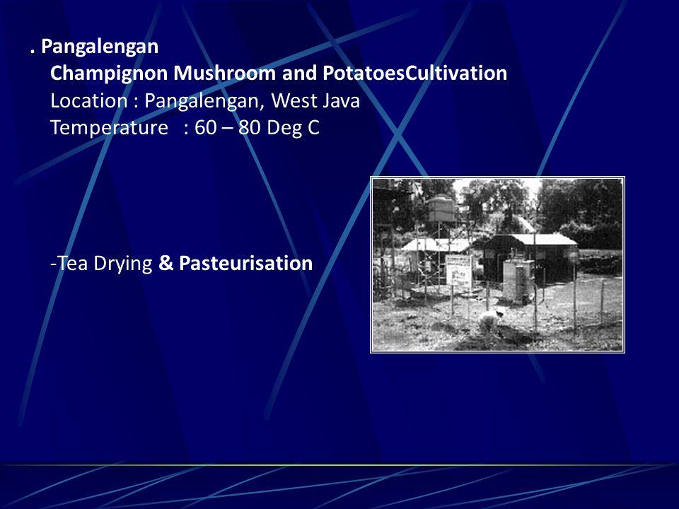 . Pangalengan Champignon Mushroom and PotatoesCultivation Location : Pangalengan, West Java Temperature : 60 – 80 Deg C -Tea Drying & Pasteurisation