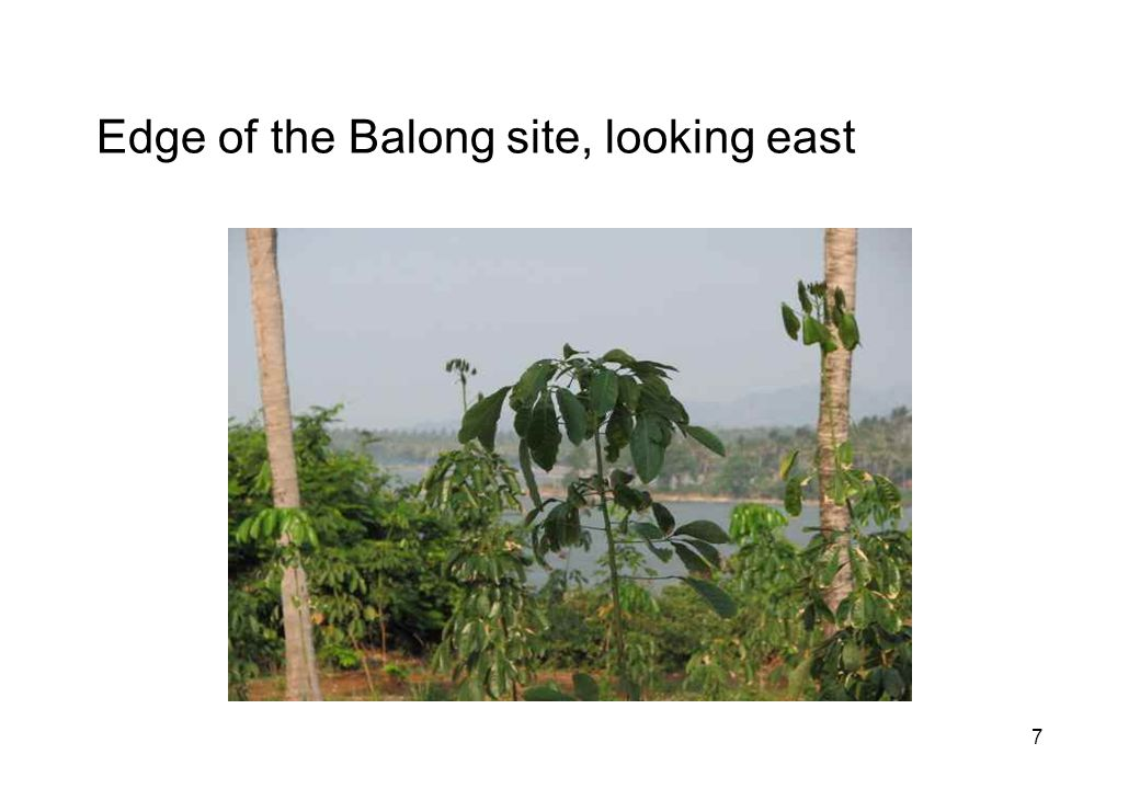 7 Edge of the Balong site, looking east