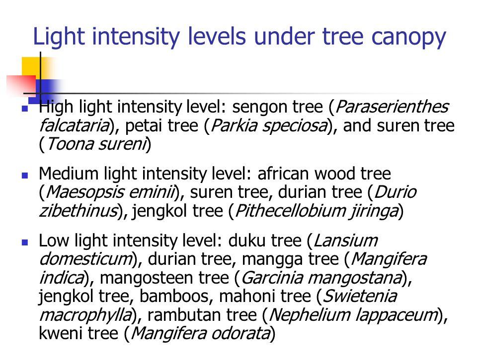 Light intensity levels under tree canopy High light intensity level: sengon tree (Paraserienthes falcataria), petai tree (Parkia speciosa), and suren tree (Toona sureni) Medium light intensity level: african wood tree (Maesopsis eminii), suren tree, durian tree (Durio zibethinus), jengkol tree (Pithecellobium jiringa) Low light intensity level: duku tree (Lansium domesticum), durian tree, mangga tree (Mangifera indica), mangosteen tree (Garcinia mangostana), jengkol tree, bamboos, mahoni tree (Swietenia macrophylla), rambutan tree (Nephelium lappaceum), kweni tree (Mangifera odorata)