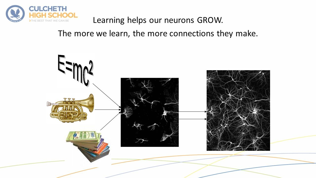 Learning helps our neurons GROW. The more we learn, the more connections they make.