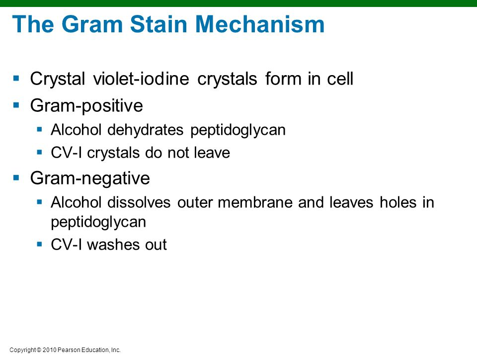 Copyright © 2010 Pearson Education, Inc. The Gram Stain Mechanism  Crystal violet-iodine crystals form in cell  Gram-positive  Alcohol dehydrates p