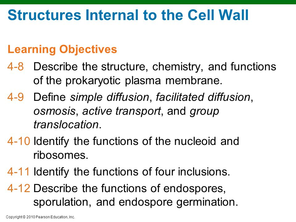 Copyright © 2010 Pearson Education, Inc. Structures Internal to the Cell Wall 4-8Describe the structure, chemistry, and functions of the prokaryotic p