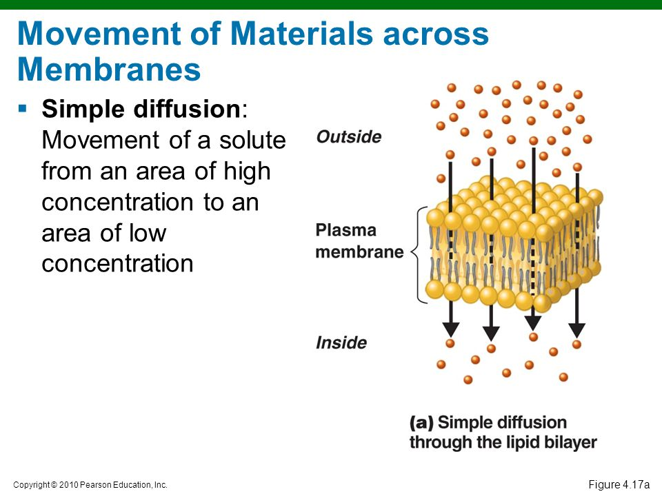 Copyright © 2010 Pearson Education, Inc. Figure 4.17a Movement of Materials across Membranes  Simple diffusion: Movement of a solute from an area of