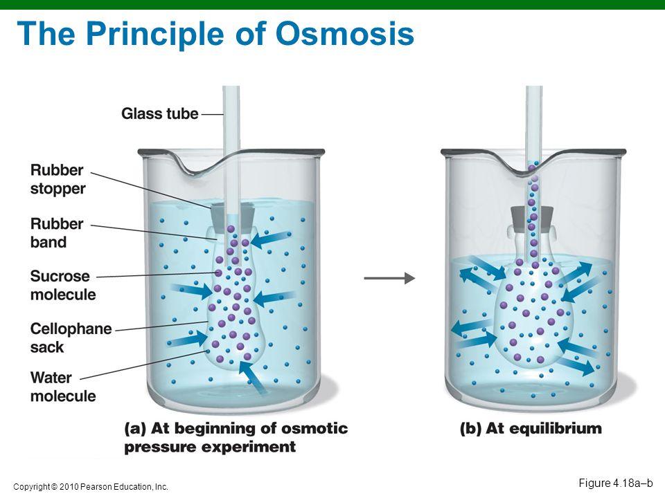 Copyright © 2010 Pearson Education, Inc. Figure 4.18a–b The Principle of Osmosis